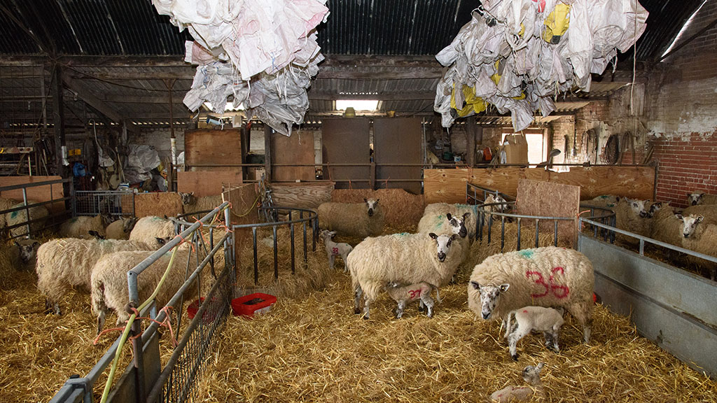 Sheep special: Planning a worming strategy at lambing time