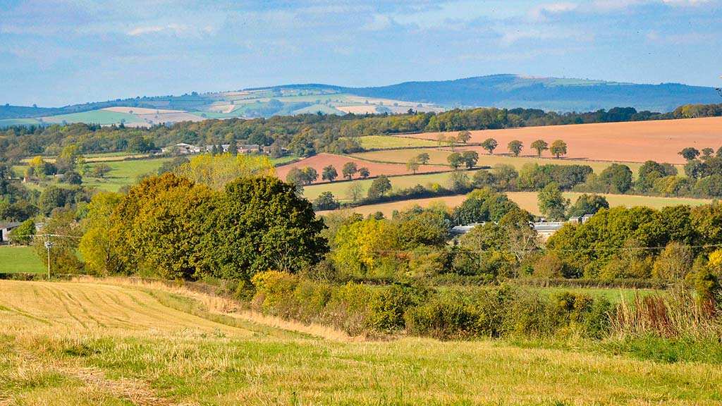 'Stepping stone' scheme will not help farmers prepare for ELMs, say green groups