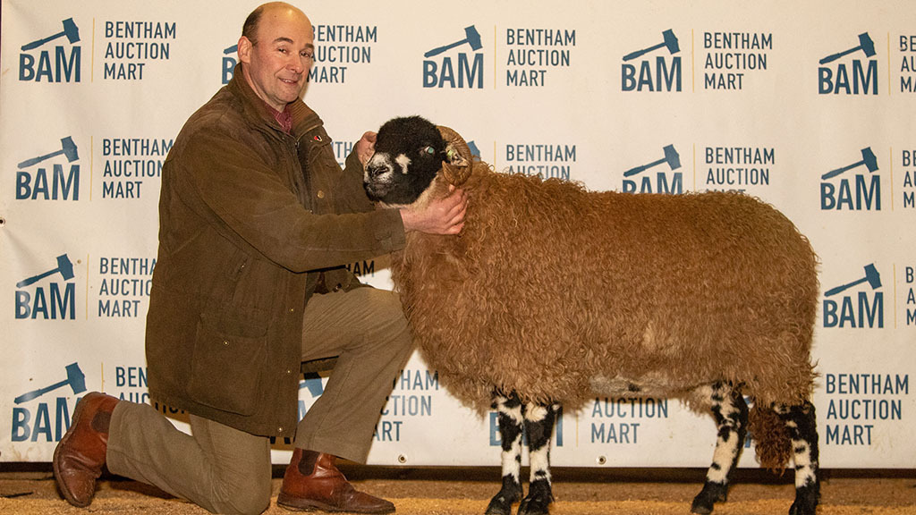 New Dalesbred female record set at Bentham