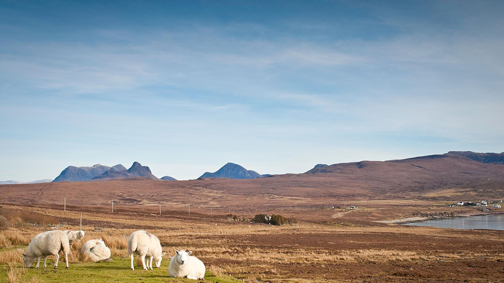 Divide between Scottish and English agriculture grows