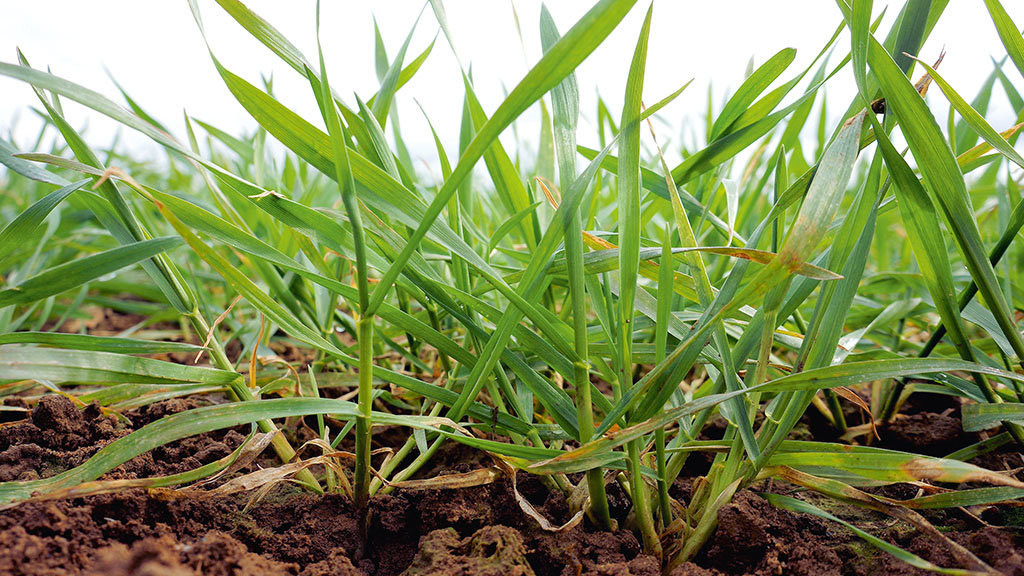 Warm end to March gets crops off to good start