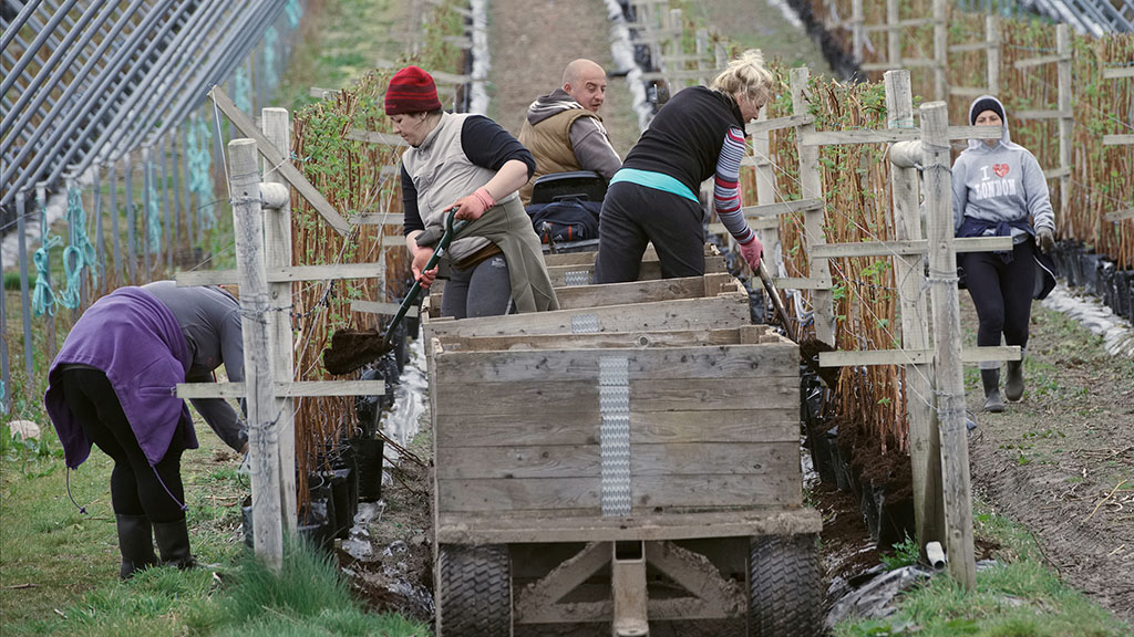 Online recruitment platform sees first time pickers help bridge farm work gap
