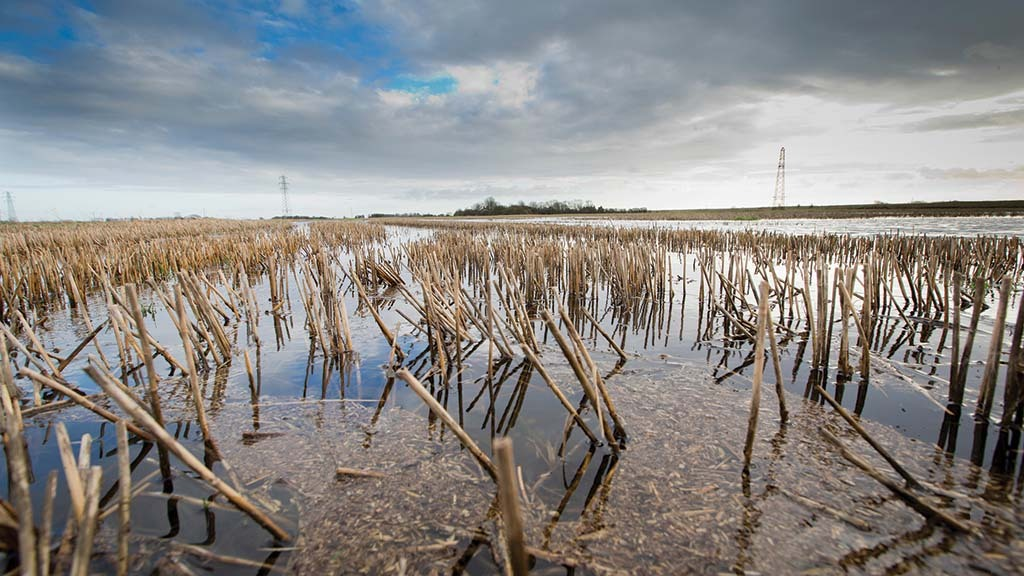'Real risk' of not being able to harvest some crops amid wet weather misery