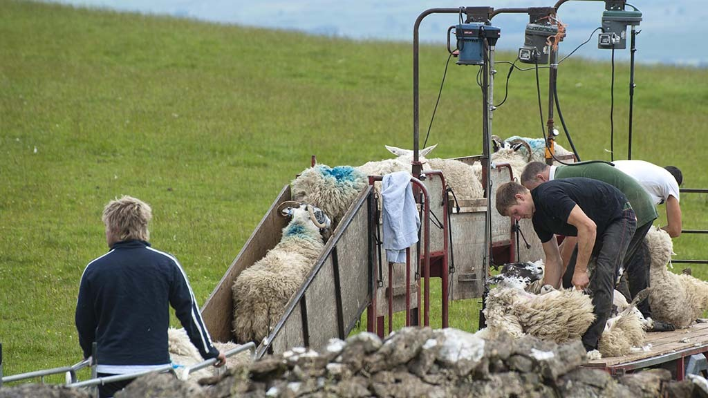 Service to connect contractors with UK shearers now live