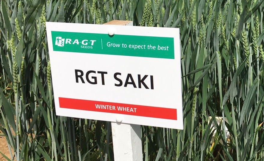 Take a sneak peak at this robust newcomer, RGT Saki