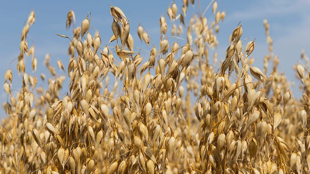 Exploiting new markets as oat demand soars