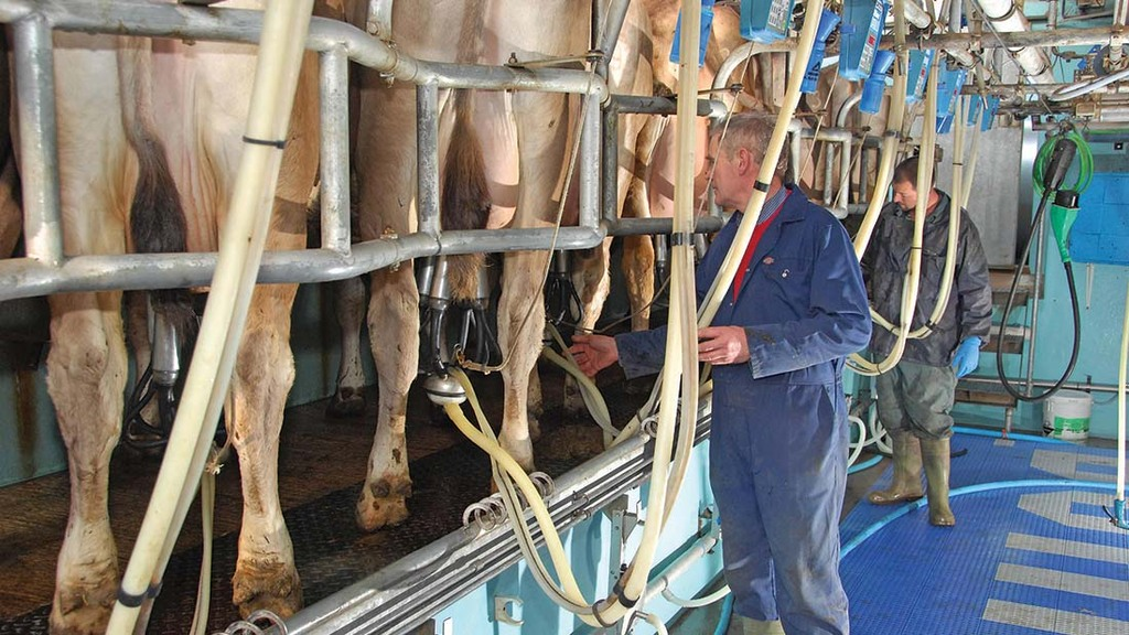 Taking a lean approach to dairy farming