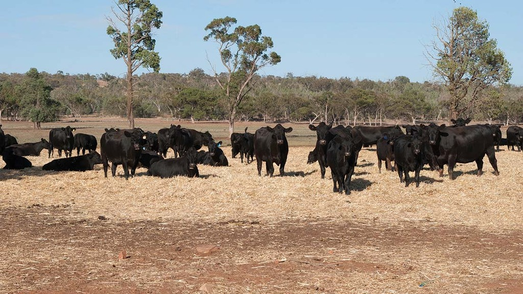 Australia beef exports to China cut as trade tensions escalate