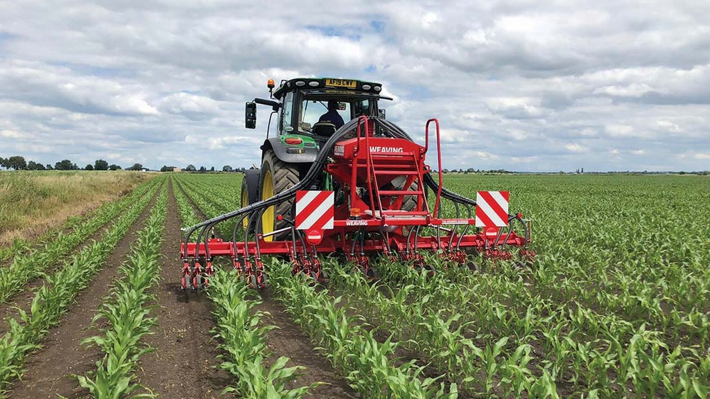 Undersowing maize: What, when and how to undersow to get the best results