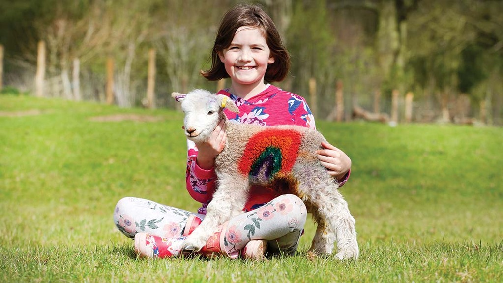 Young shepherdess pays tribute to NHS with 'rainbow lamb'