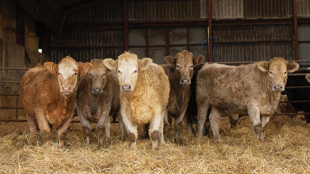 Finished cattle are sold deadweight at 24-26 months.