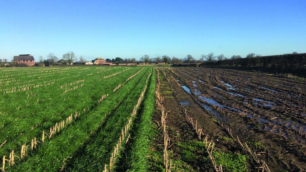 Reaping the benefits of undersown maize