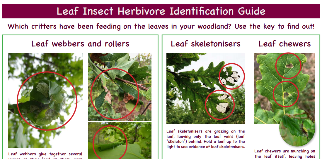 Leaf Insect Herbivore Identification Guide