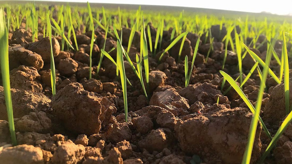 Top tips for reducing stress in spring barley