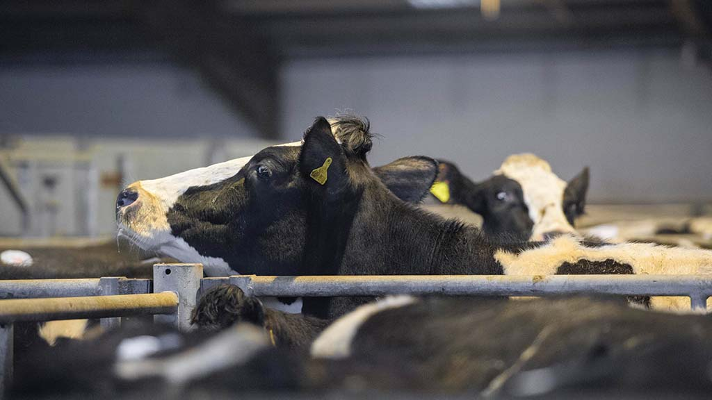 Marts show resilience in face of pandemic