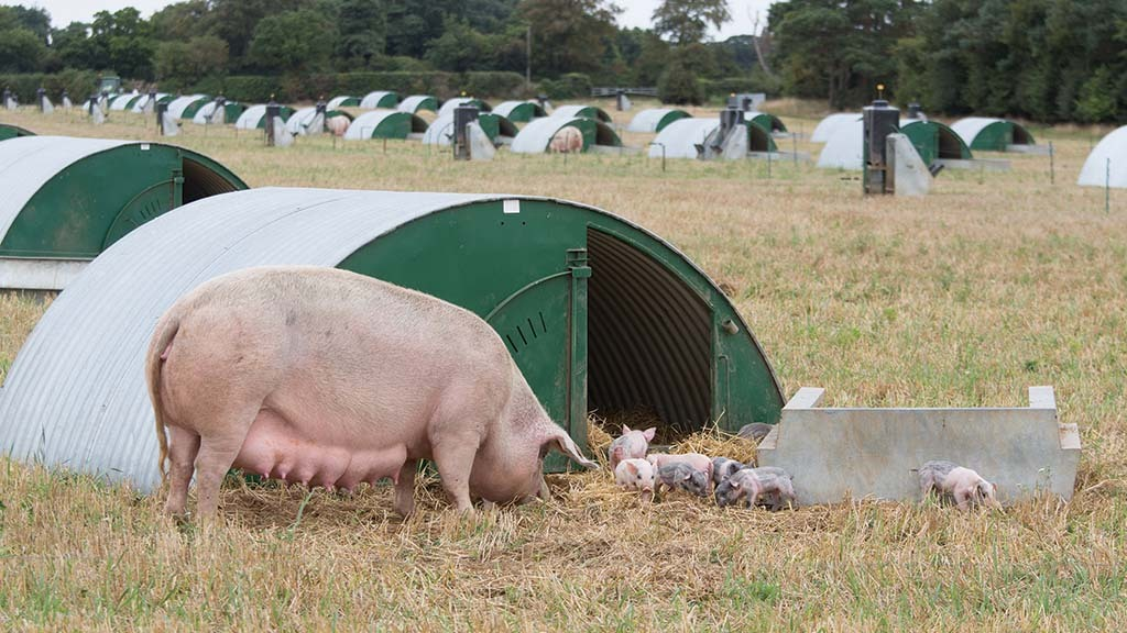 Promoting the value of outdoor pigs to future landlords