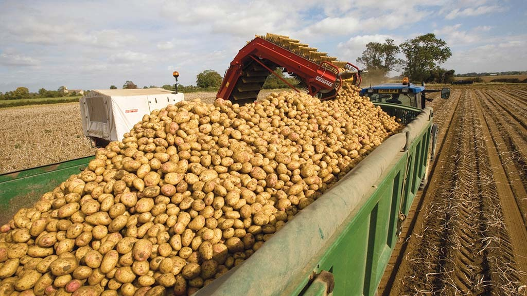 Average potato yields estimated in North-Western Europe