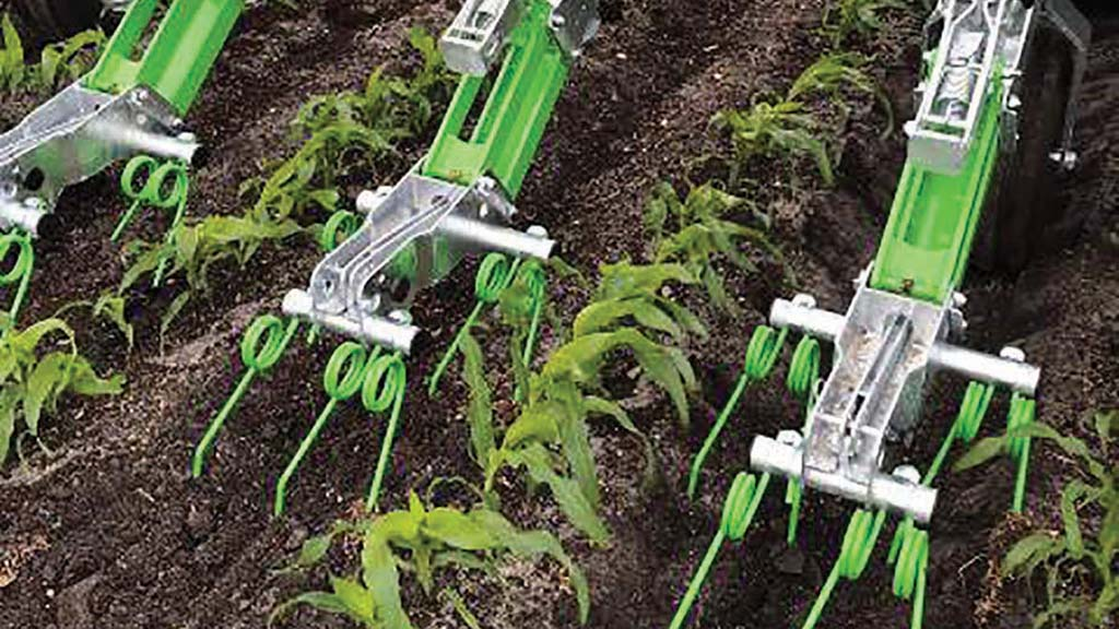Tines are used to establish the undersown crop.