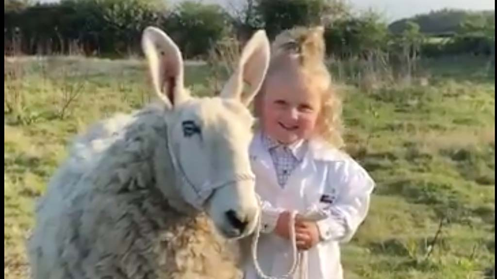 Three-year-old girl goes viral after 'expert' sheep handling