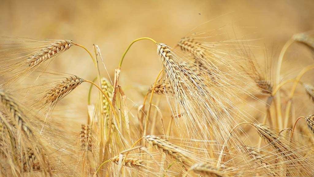 Food production system 'crying out' for more diverse cropping