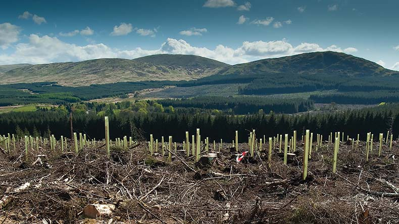 Tree planting plans threaten future of tenant farming in Scotland
