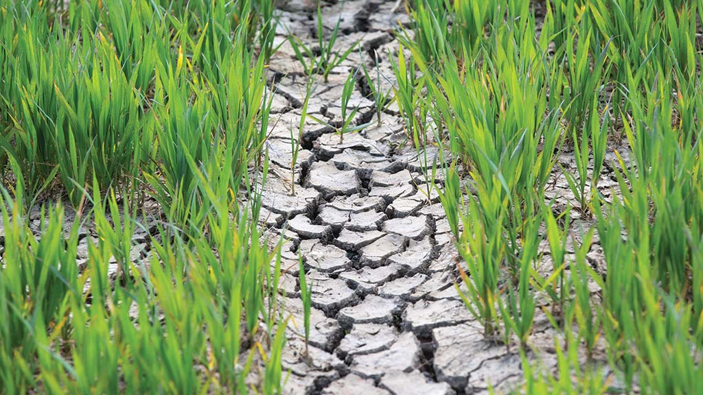 Farmers voice drought distress as spell of dry weather continues