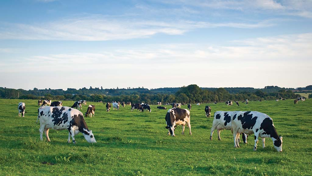 Dairy training and education directory launched by industry