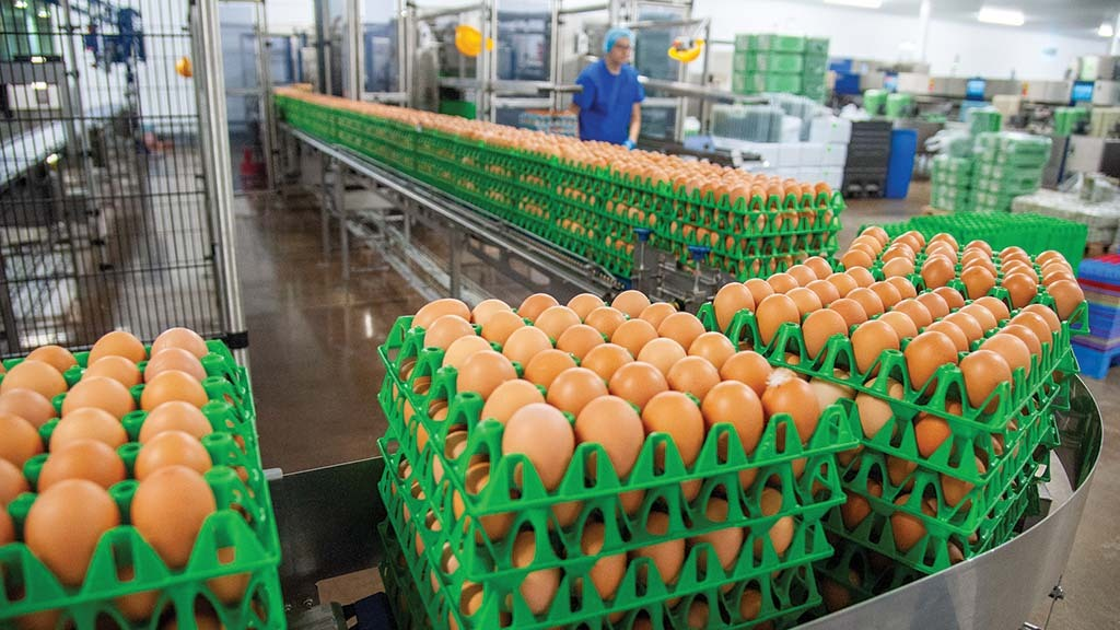 Rapid expansion in free-range is 'not required' to meet retail cage-free egg pledges