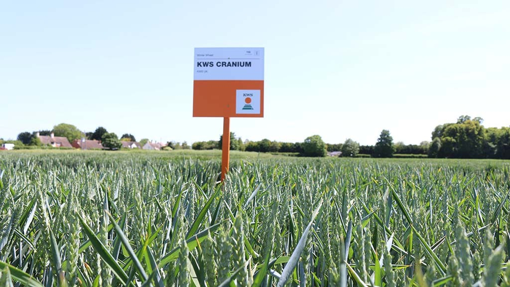 Cereals Live: Group 4 wheat and 2-row barley launched