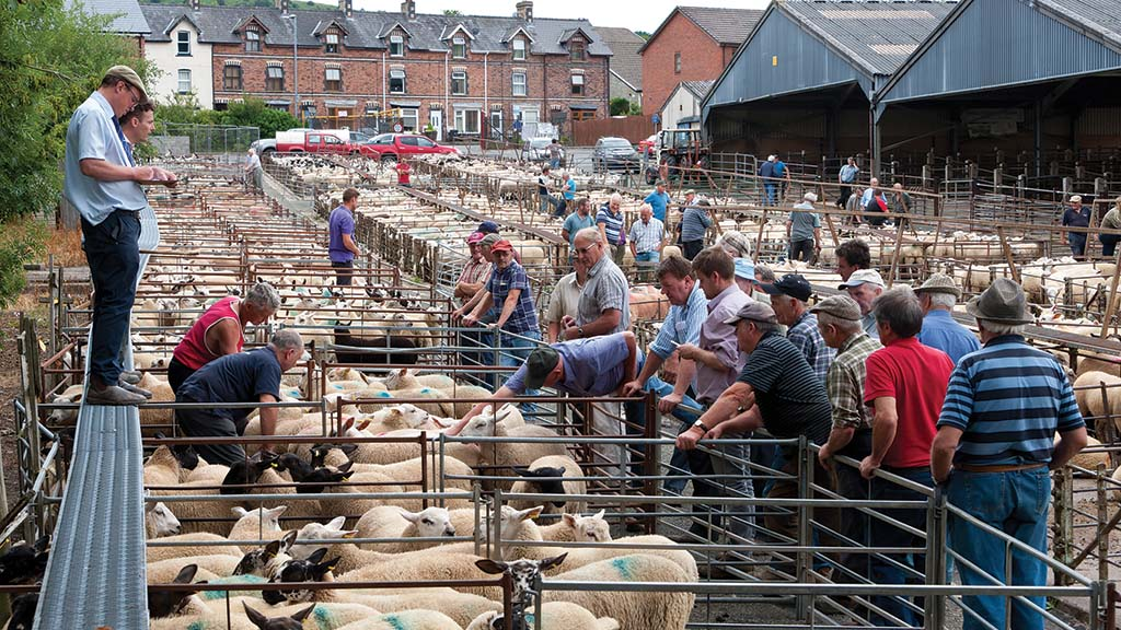 Livestock sales to resume at Builth Wells auction mart under site's new ownership