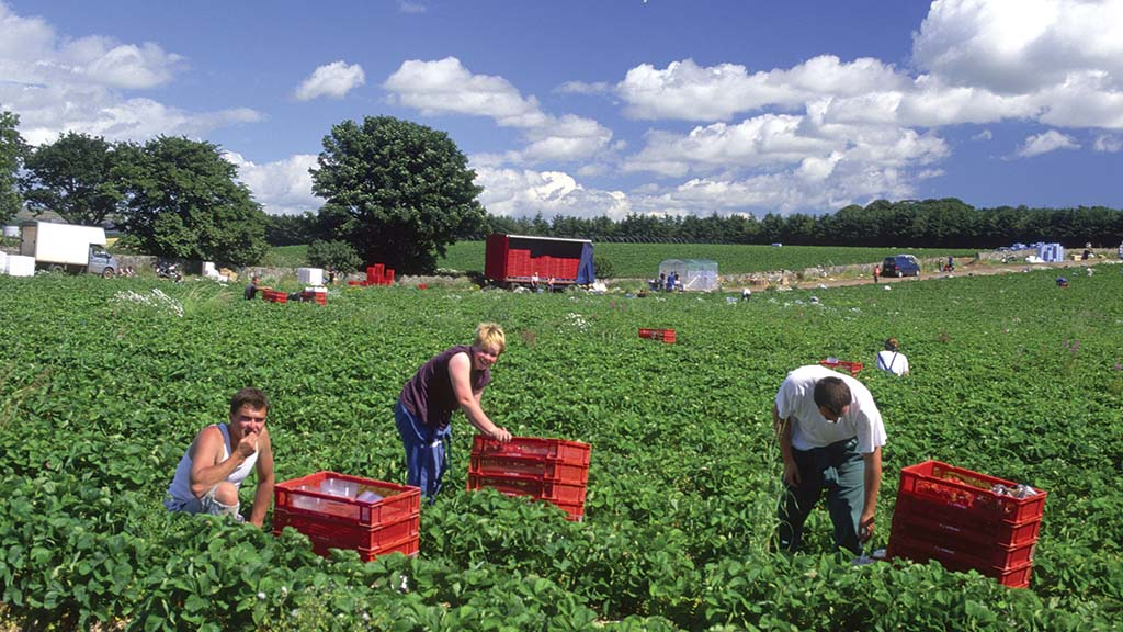 Horticulture businesses need better returns or could become unviable
