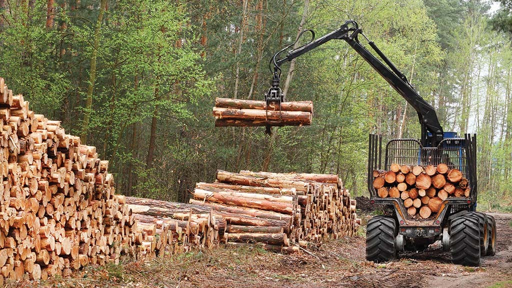 UK forestry sector continues to grow