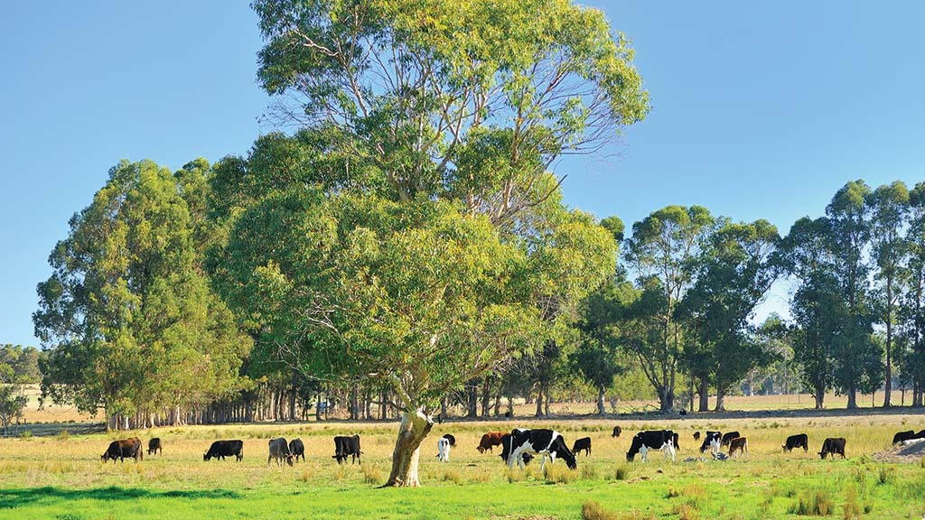 Australian dairy processors forced to publish milk contracts online