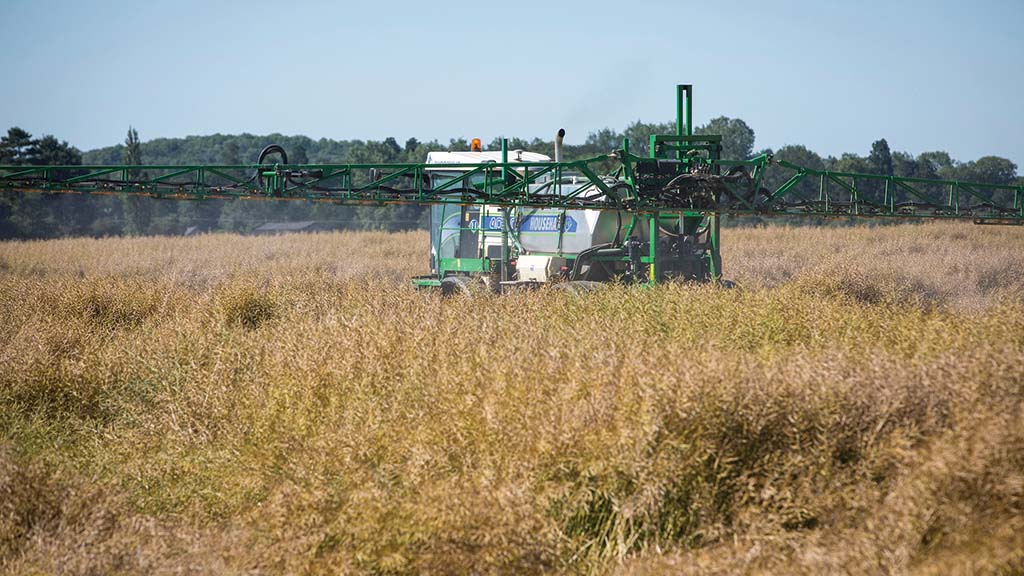 Getting glyphosate right in harvest management