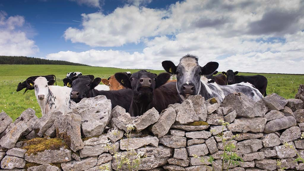 Beef producers can capitalise on growing retail demand