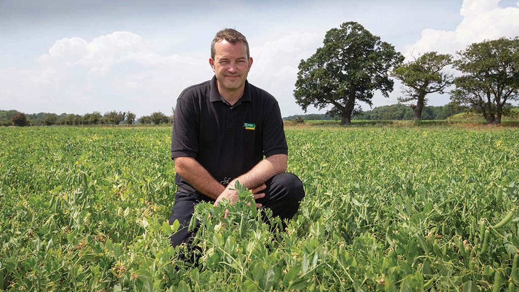 Growers co-op focus: What does it take to plan and deliver a successful pea harvest?