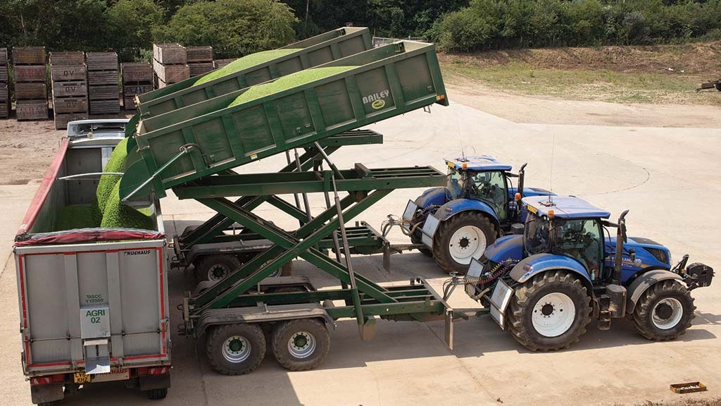Peas are sent to a processor in Lowestoft.