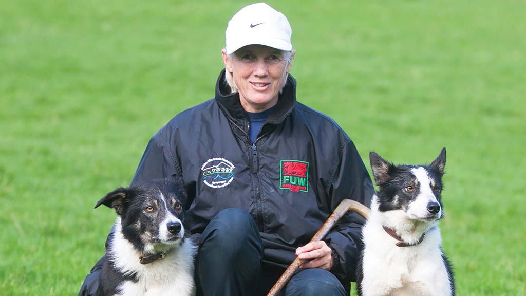 Backbone of Britain: Dedicated to helping young sheepdog handlers – new academy launched