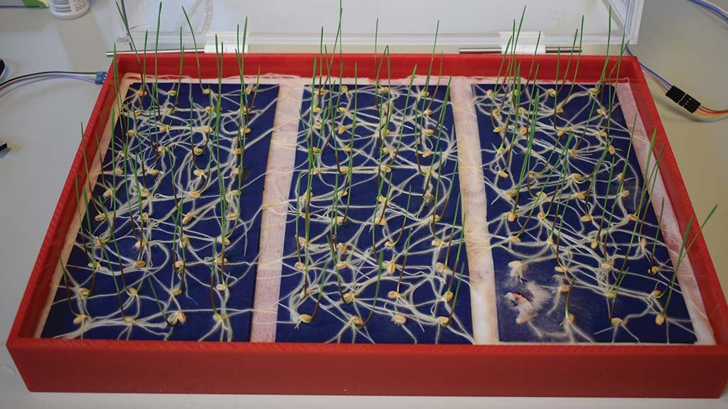 Artificial intelligence solves the problem of seed germination tests