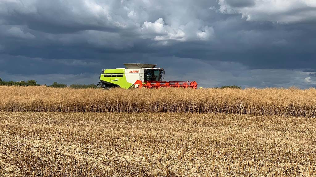 Harvest 20: Early drilling key as OSR harvest commences in Cambridgeshire