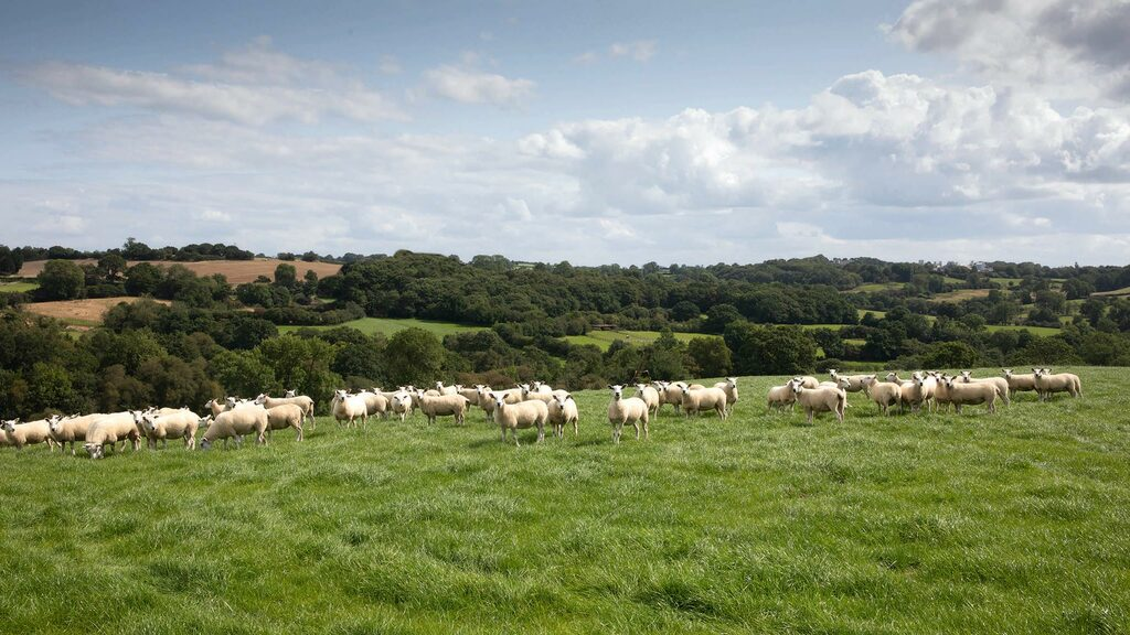 What will the Animal Health and Welfare pathway mean for English farmers?