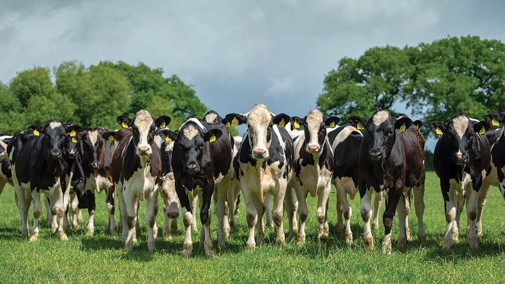 Eligibility concerns sees poor uptake of Government's Covid-19 dairy support scheme