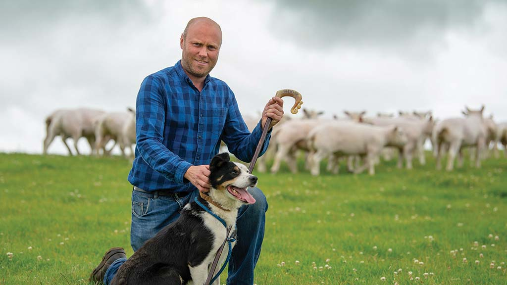 Sheep special: Quality Texel rams mainstay of Northumberland flock