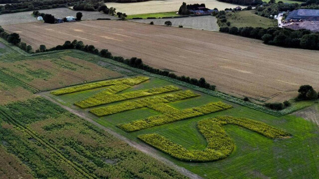 Farmer's sunflower tribute raises 'vital' funds for NHS