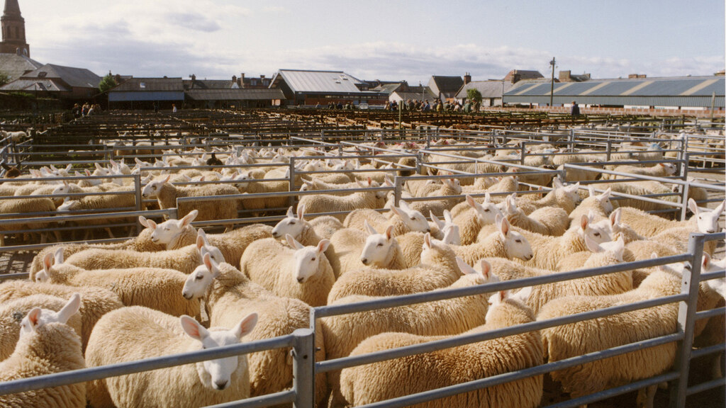 Provenance boosts beef and lamb values
