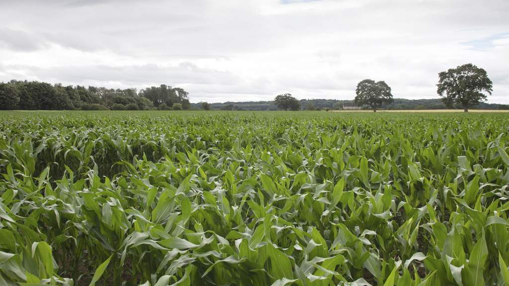 The difference between a good crop and a poor one can equate to four tonnes of dry matter per ha (1.6t DM/acre).