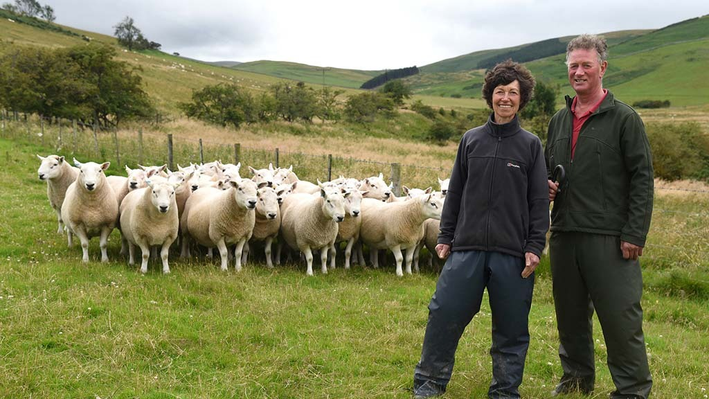 Sheep special: New chapter pending on Northumberland hill farm