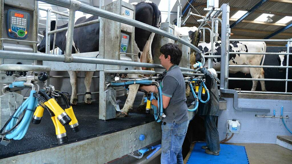 Processors know a significant number of dairy farmers will not leave the industry and are born optimists, says Ian Potter.