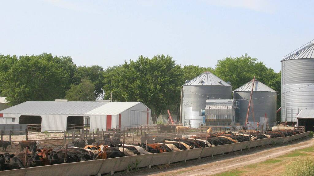 US beef production up in 2020