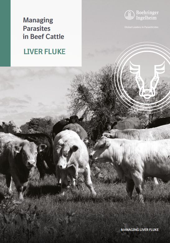 Managing parasites in Beef Cattle - Liver Fluke